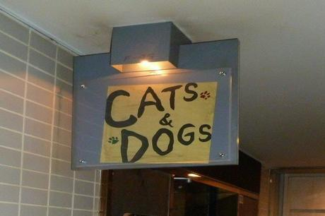 +CATS&DOGS①